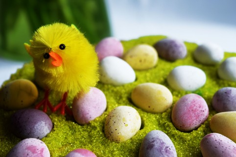 Easter Chick and mini eggs